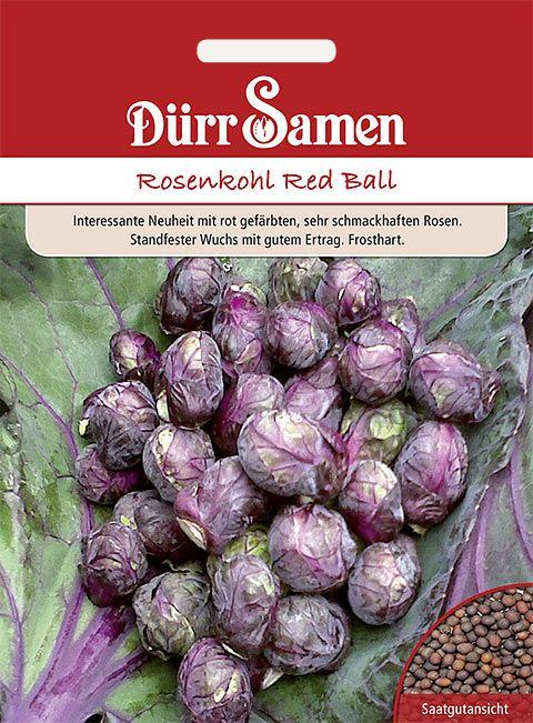 Dürr Samen Rosenkohl  Red Ball