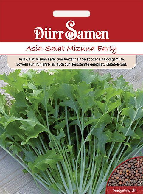 Dürr Samen Asia-Salat  Mizuna Early