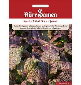 Dürr Samen Asia-Salat Red Giant