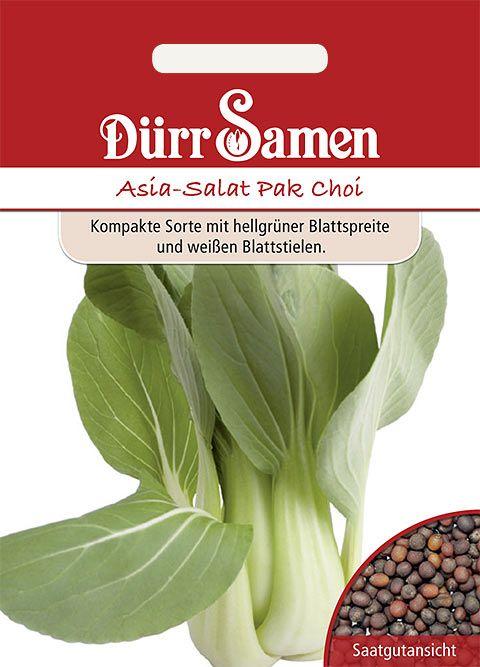 Dürr Samen Asia-Salat  Pak Choi