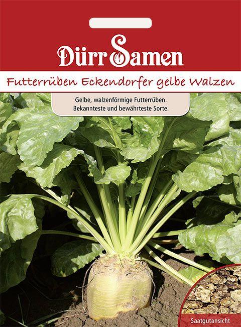 Dürr Samen Futterrüben Eckendorfer gelbe Walzen