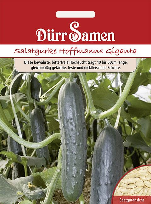 Dürr Samen Salatgurken  Hoffmanns Giganta
