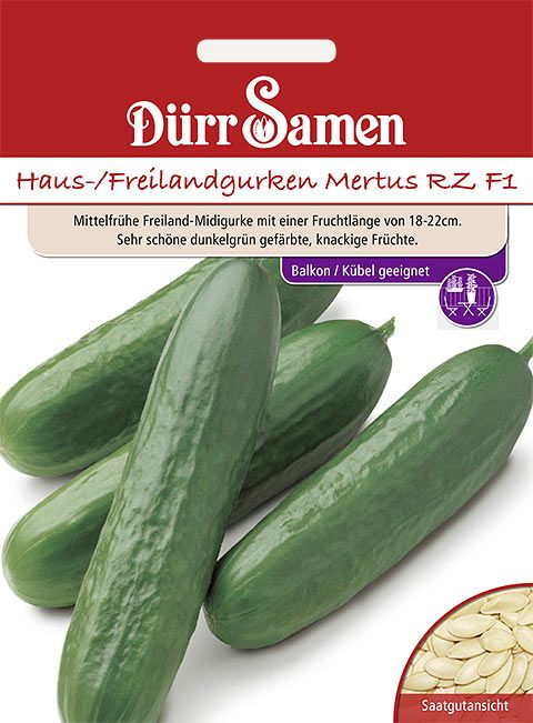 Dürr Samen Haus- und Freilandgurken  Mertus RZ F1