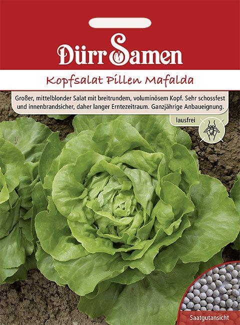 Dürr Samen Kopfsalat in Pillen  Mafalda