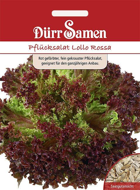 Dürr Samen Pflücksalat Lollo Rossa