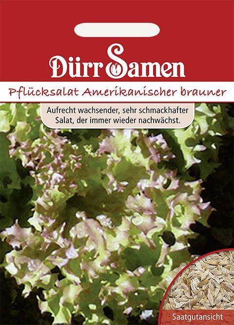 Dürr Samen Pflücksalat  Amerikanischer Brauner