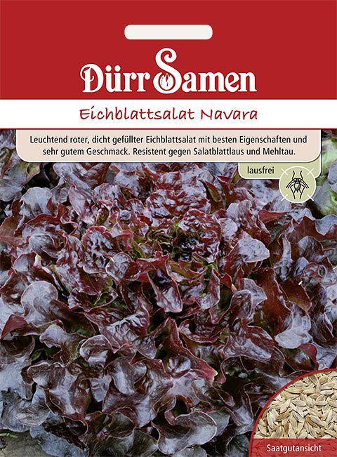 Dürr Samen Eichblattsalat  Navara