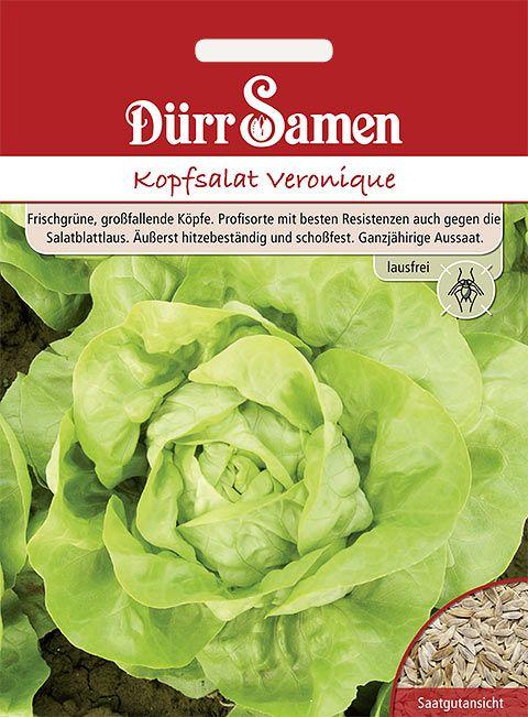Dürr Samen Kopfsalat  Veronique