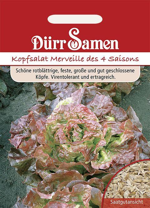 Dürr Samen Roter Kopfsalat Merveille de 4 saisons