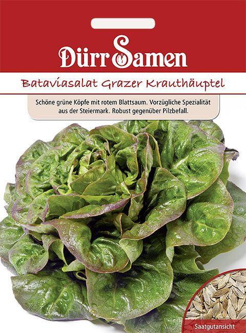 Dürr Samen Bataviasalat  Grazer Krauthäuptel