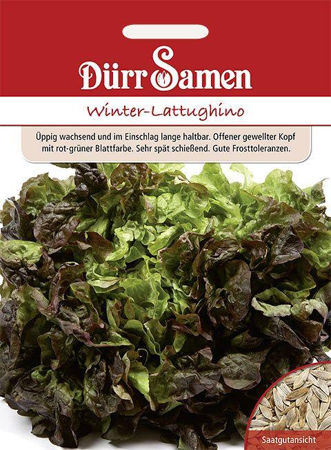 Dürr Samen Winter-Lattughino