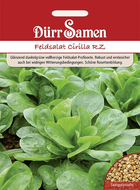 Dürr Samen Feldsalat  Cirilla RZ