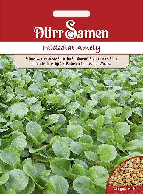 Dürr Samen Feldsalat  Amely