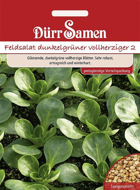 Dürr Samen Feldsalat  Dunkelgrüner vollherziger (Vorteilspackung)