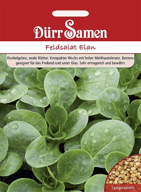 Dürr Samen Feldsalat  Elan