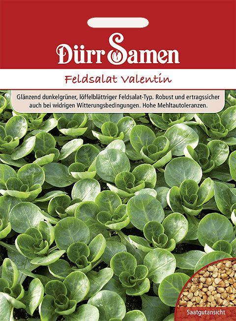 Dürr Samen Feldsalat  Valentin