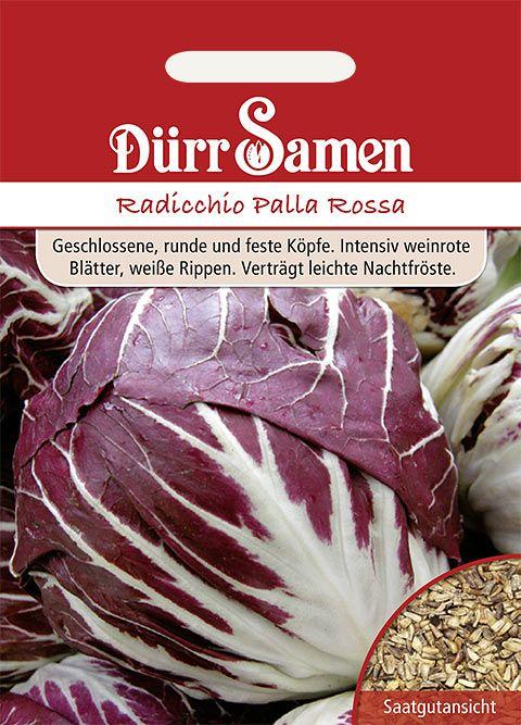 Dürr Samen Zichoriensalat  Radicchio Palla Rossa