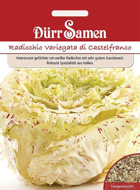 Dürr Samen Zichoriensalat  Radicchio Variegata di Castelfranco
