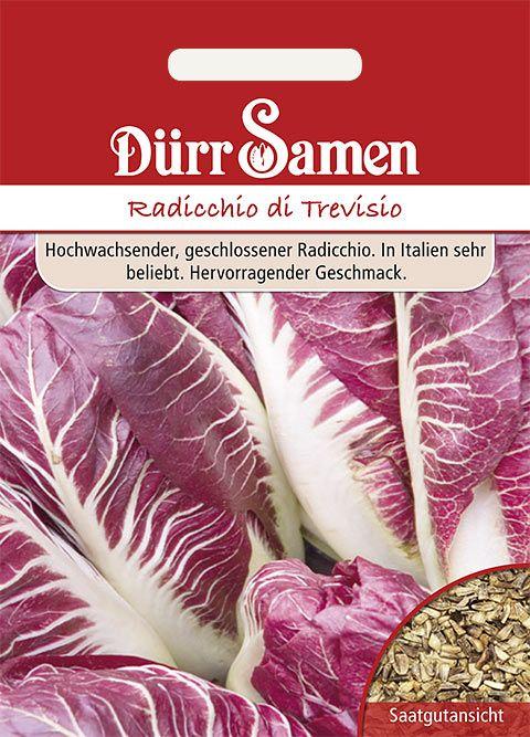 Dürr Samen Zichoriensalat  Radicchio di Treviso