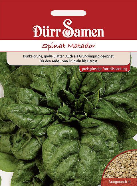 Dürr Samen Spinat  Matador (Großpackung)