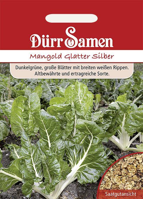 Dürr Samen Mangold  Glatter Silber