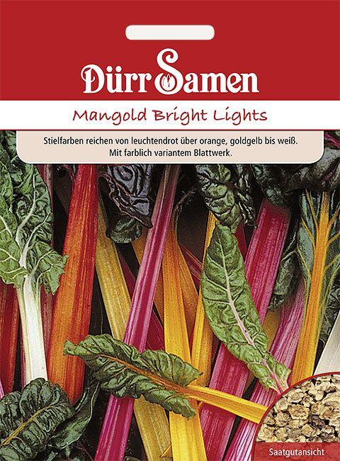 Dürr Samen Mangold  Bright Lights (Großformat)