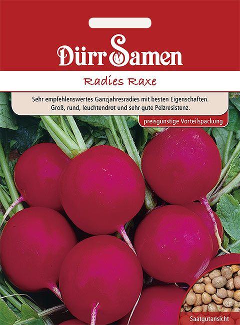 Dürr Samen Radies  Raxe (Vorteilspackung)