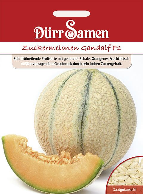 Dürr Samen Zuckermelone  Gandalf F1