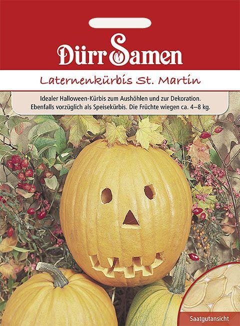 Dürr Samen Laternen-Kürbis St. Martin