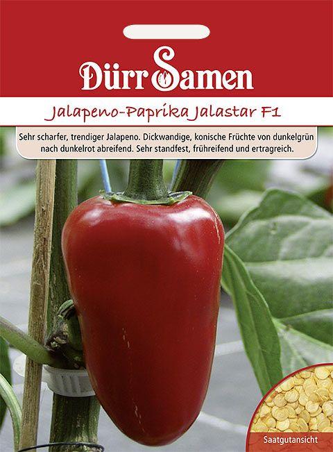 Dürr Samen Jalapeno-Paprika  Jalastar F1