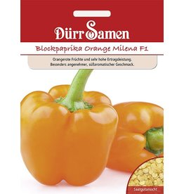 Dürr Samen Blockpaprika Orange Milena F1