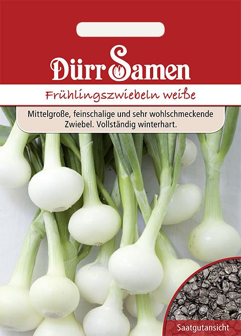 Dürr Samen Frühlingszwiebeln  Vaugirard Weiße