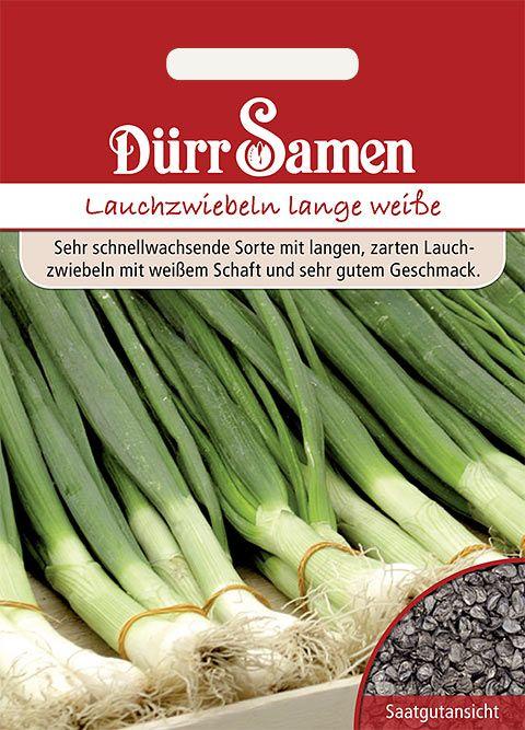 Dürr Samen Lauchzwiebeln  Lange Weiße Kaigaroo