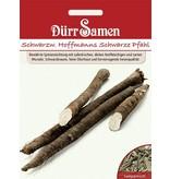 Dürr Samen Schwarzwurzeln  Hoffmanns Schwarze Pfahl