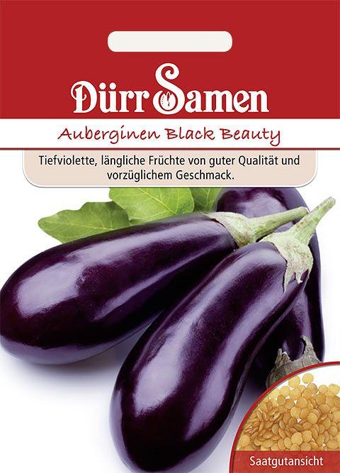 Dürr Samen Auberginen  Black Beauty
