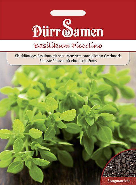 Dürr Samen Basilikum  Piccolino