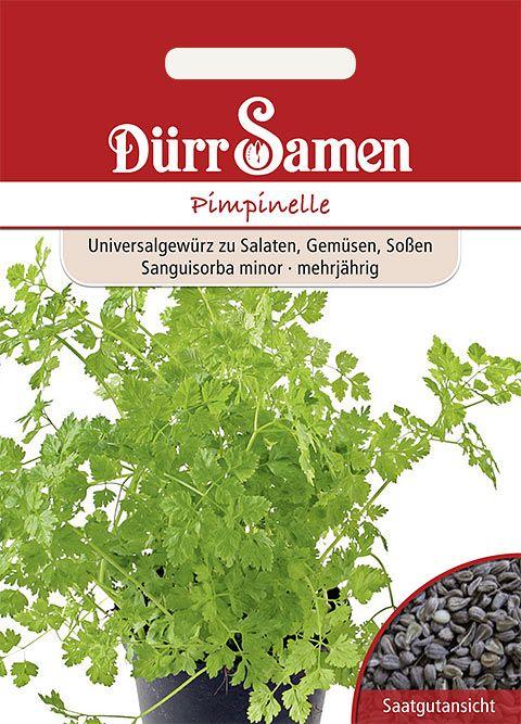 Dürr Samen Pimpinelle
