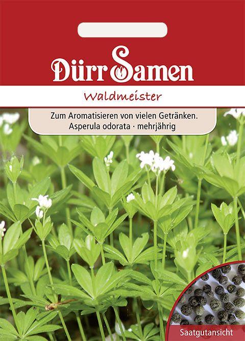 Dürr Samen Waldmeister