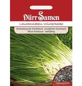 Dürr Samen Lauchzwiebeln  Winterhecke