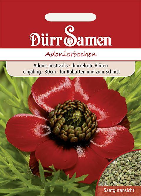 Dürr Samen Adonisröschen einjährig, 30cm