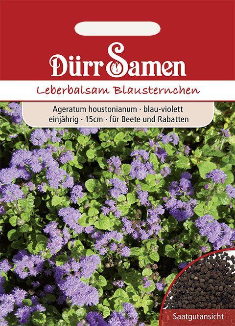 Dürr Samen Leberbalsam/Blausternchen