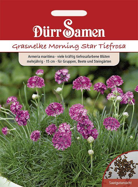 Dürr Samen Grasnelke  Morning Star, gelb mit Auge, zweijährig, 20cm