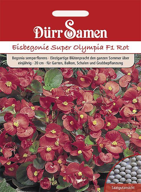 Dürr Samen Eisbegonie  Super Olympia F1 Rot, einjährig, 20cm
