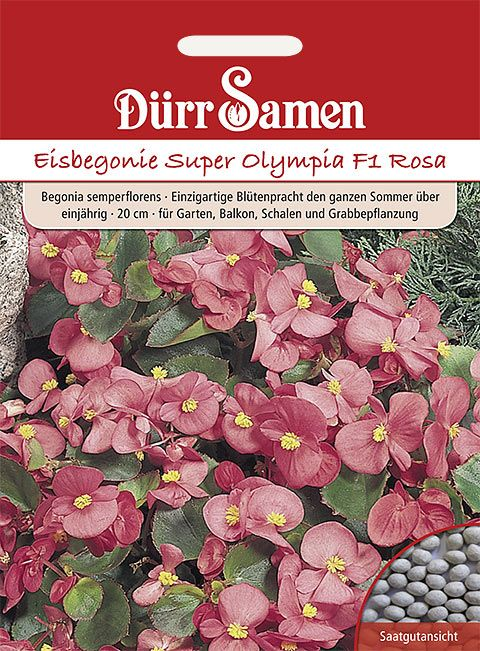 Dürr Samen Eisbegonie  Super Olympia F1 Rosa, einjährig, 20cm