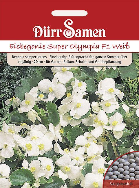 Dürr Samen Eisbegonie  Super Olympia F1 Weiß, einjährig, 20cm