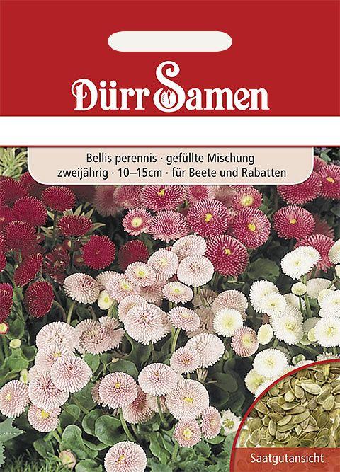 Dürr Samen Gänseblümchen  gefüllte Mischung, zweijährig, 10–15cm
