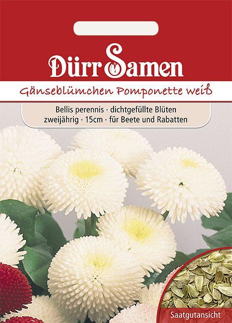 Dürr Samen Gänseblümchen  Pomponette weiß, zweijährig, 15cm
