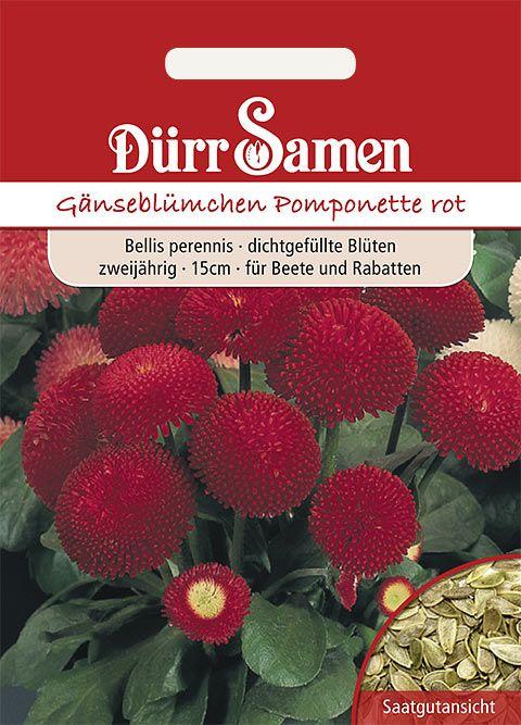Dürr Samen Gänseblümchen  Pomponette rot, zweijährig, 15cm