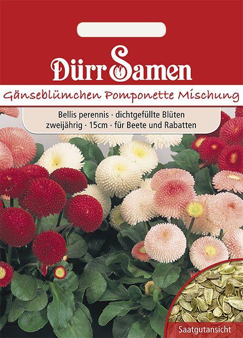 Dürr Samen Gänseblümchen  Pomponette Mischung, zweijährig, 15cm