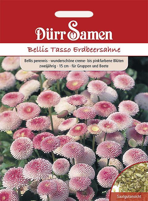 Dürr Samen Gänseblümchen  Bellis Erdbeersahne, zweijährig, 15cm